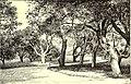 The American garden (1890) (17526981294).jpg