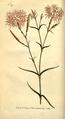 The Botanical Magazine, Plate 297 (Volume 9, 1795).png