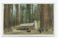The Cabin, Grove of Big Trees, Mariposa, Calif (NYPL b12647398-73965).tiff