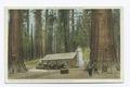 The Cabin, Grove of Big Trees, Mariposa, Calif (NYPL b12647398-73965).tiff