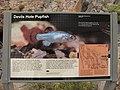 The Devils Hole Pupfish (5628756233).jpg
