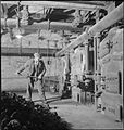 The Gardens of Kew- the work of Kew Gardens in Wartime, Surrey, England, UK, 1943 D16498.jpg