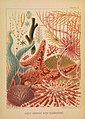 The Great Barrier Reef of Australia (CHROMO XI) (7044672127).jpg