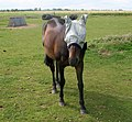 The Hooded Horse, Goxhill - geograph.org.uk - 885747.jpg
