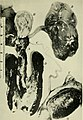 The biochemistry of semen (1954) (20362530802).jpg