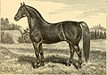 The breeds of live stock, and the principles of heredity (1887) (14778764584).jpg