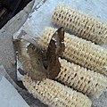The butterfly1.2-brown-grey-salem Wiki DEC2011-Tamil Nadu594.jpg