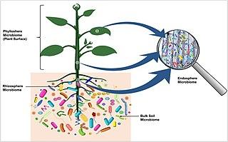 Microbiota Community of microorganisms