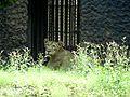 Thinking lion.jpg