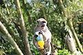 Thirsty Monkey.jpg