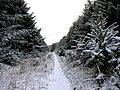 Threestoneburn Wood - geograph.org.uk - 1102591.jpg
