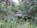 Tilden botanical garden 5.JPG