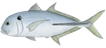 Tille trevally.png