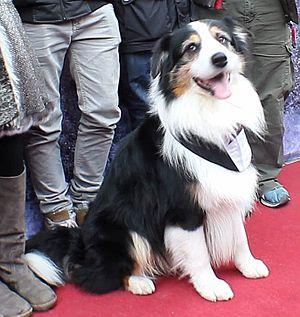 Famous Five (film) - Filmdog Coffey plays Timmy