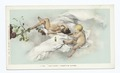 Tojetti's Frescoes - Flute, Ponce de Leon H., St. Augugtine, Fla (NYPL b12647398-66375).tiff