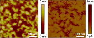 Conductive atomic force microscopy - Topographic (left) and current (right) maps collected with CAFM on a polycrystalline HfO2 stack. The images show very good spatial correlation.