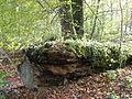 Totholz im Westerholz 1.JPG