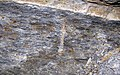 Trace fossil in Vinton Member siliciclastics (Logan Formation, Lower Mississippian; Rt. 16 roadcut northeast of Frazeysburg, Ohio, USA) 8 (33047067020).jpg