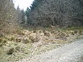 Track junction in the forest - geograph.org.uk - 1266930.jpg