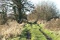 Track on Chilton Moor - geograph.org.uk - 109553.jpg