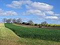 Tractor rolling field adjacent Streatlam Grove farm - geograph.org.uk - 406850.jpg