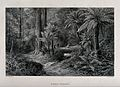 Tree-ferns in an Australian forest with two hunters in the d Wellcome V0043211.jpg