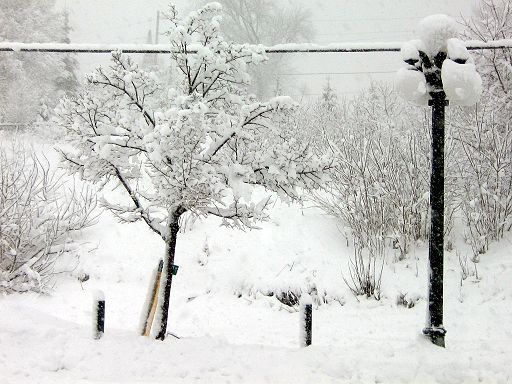 Tree and street lamp in winter.jpg