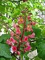 Tree flower dsc00985.jpg