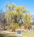Tree in Green-Wood Cemetery (50086p).jpg