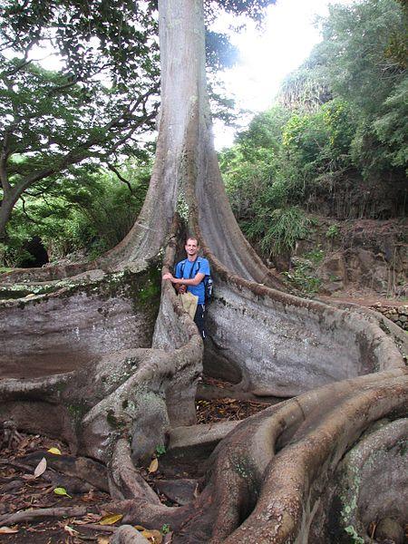 Aj takéto veľké môžu byť korene