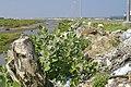 Tree stumps and debris remain on Karaikal beach after the 2004 tsunami.jpg