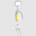 Triceps brachii muscle03.png