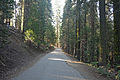Tuolumne Grove Trailhead 02 (4245552242).jpg