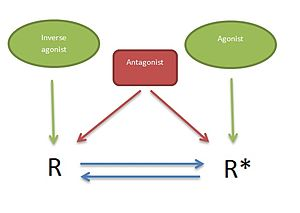 5-HT2C receptor agonist - Image: Two state model