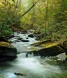A stream flows over smooth rocks, surrounded by trees with green, yellow, and orange leaves.