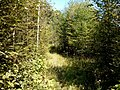 Ulchsky District, Khabarovsk Krai, Russia - panoramio (105).jpg
