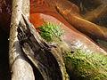 Unbekanntes biologisches Objekt auf abgestorbenem Rotbuchen-Ast.jpg