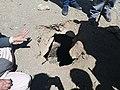 Underground Granary at Sodh Khar Kargil.jpg
