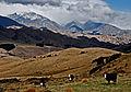 Upper Awatere Valley.jpg
