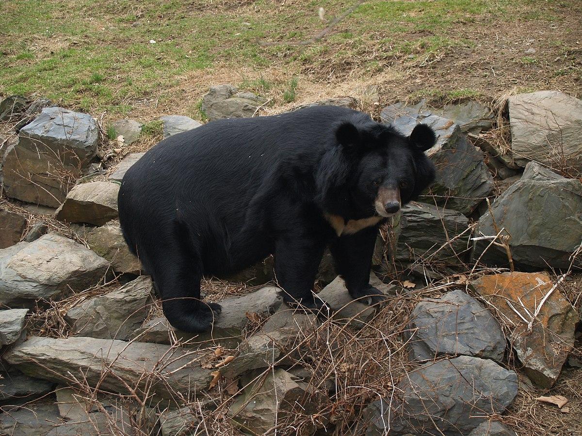 Купить гималайского медведя советские рубли стоимость каталог