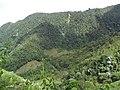Vegetación en Farallones del Citará.JPG