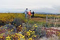 Vernal pool restoration site at Camp Pendleton (35051726581).jpg