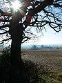View across Leicestershire farmland - geograph.org.uk - 699776.jpg