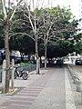 View in Nanshan, Shenzhen, Guangdong 17.jpg
