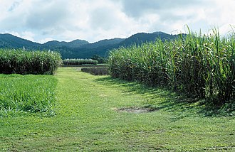 Feluga, Queensland - Sugarcane plantations in Feluga, 2007