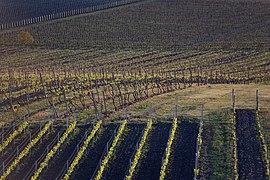 View of vineyards from Slunečná observation tower 2020 02.jpg