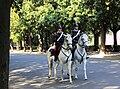 Villa Borghese Horse Police 2011.jpg