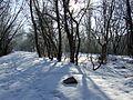 Volgodonsk, Rostov Oblast, Russia - panoramio (1).jpg