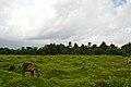 WBHIDCO Action Area II - Rajarhat - North 24 Parganas 2013-06-15 0088.JPG