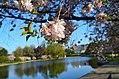 Wade Park Lagoon (8687319406).jpg